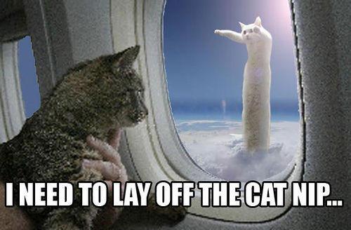 cute-funny-Cat-meme-23