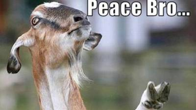 funny goat pictures with captions