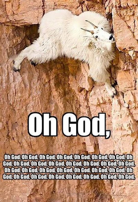 funny mountain goat images with caption