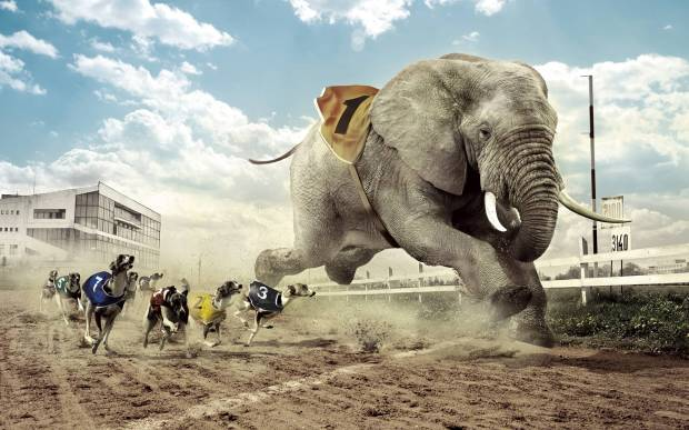 3d funny picture animals race