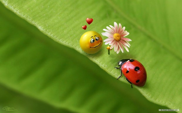 funny ladybug emoji love hd wallpaper 3d