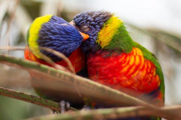 parrots hd picture
