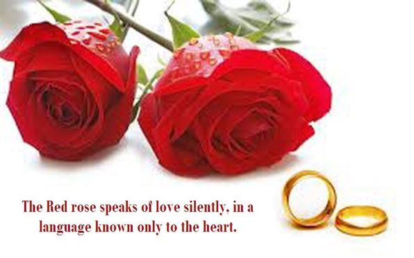 red rose love quotes