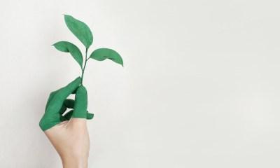 materiales sustentables_enteurbano