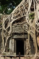 Some of the original Tomb Raider movie was filmed inside Ta Prohm. At night, this place is even eerier than it is during the day.