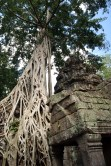 Many of the trees that are entwining themselves around and into the fabric of the buildings seem to be strangler figs, a familiar sight in tropical rainforests.