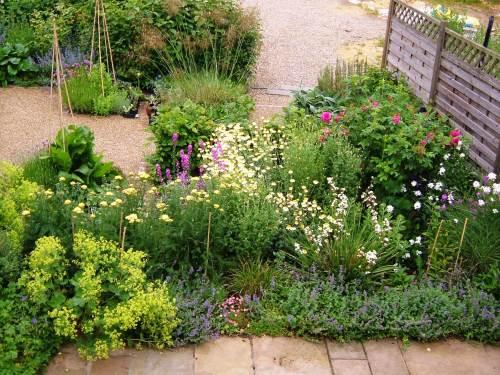 Patio garden, June 2013