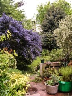 2013 London Garden LR-6524