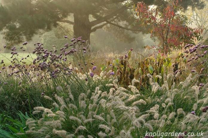 Pennisetum-Hameln (www.knollgardens.co.uk)