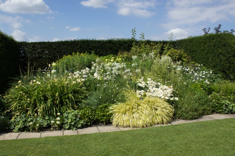 A border in the garden