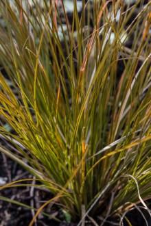 New grasses in Suffolk