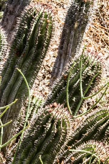 Karoo Botanic Gardens