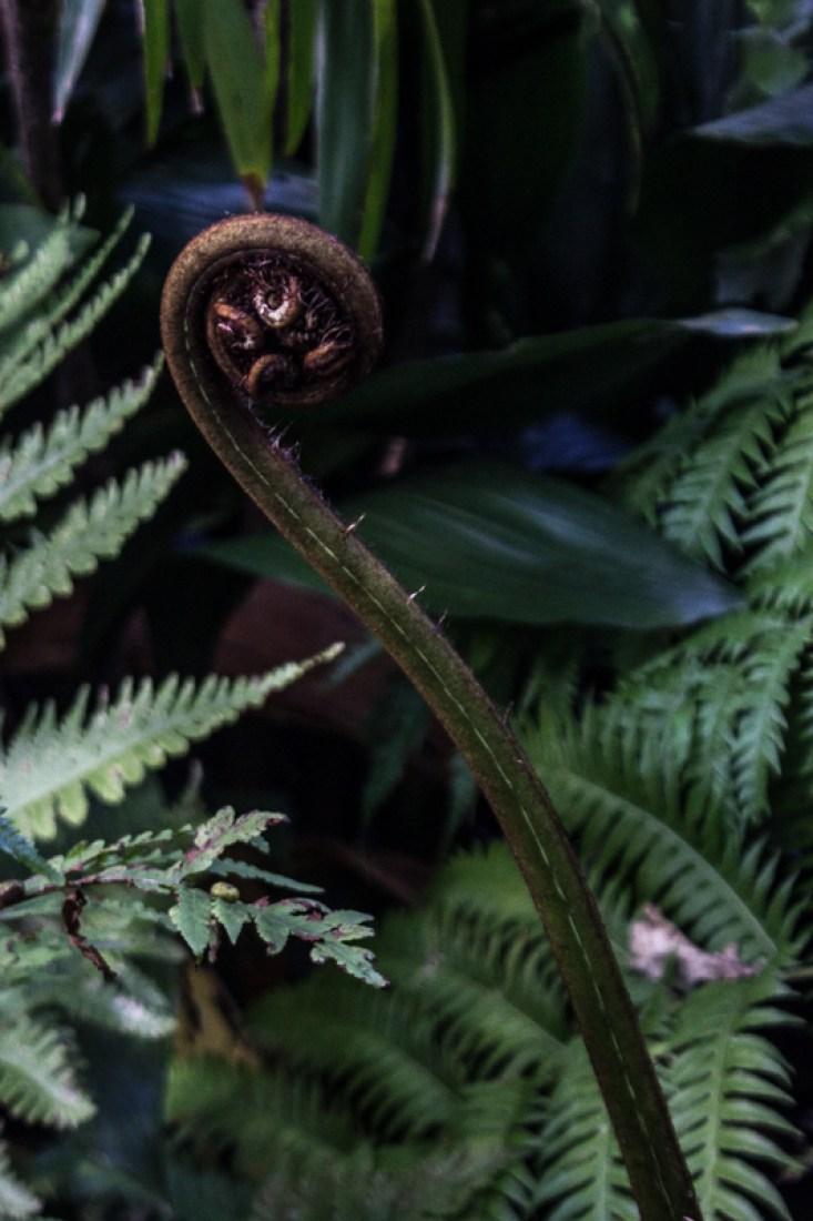 Ferns in Stellenbosch Botanic Gardens