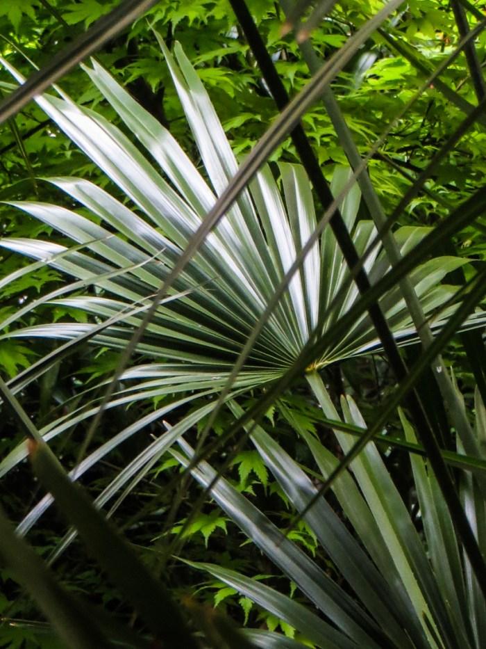 Palms in Bina Gardens East