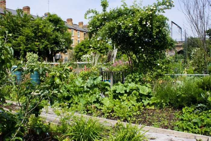 Vegetables & flowers in Cable Street Community Gardens