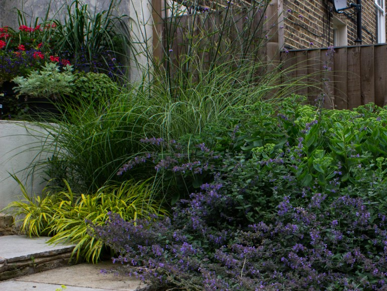 Yellow Hakonechloa on the left, with Miscanthus, Sedums, and Nepeta