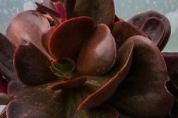 Jardins Botanique et Exotique, Roscoff