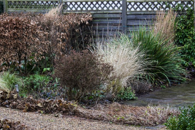 Grasses and libertia in the front garden