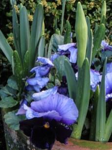 17-3-26 Spring flowers LR-5596