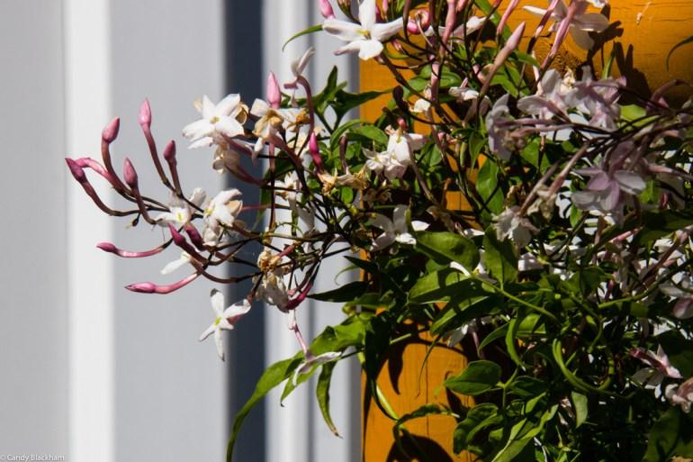Woollon House Garden