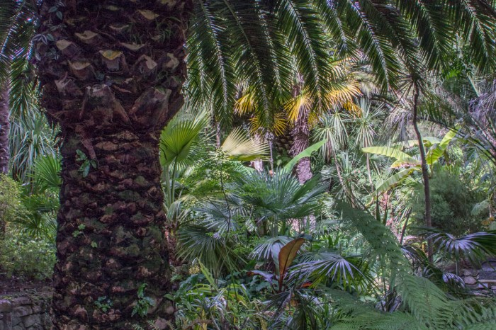 The Palm Grove in the Georges Delaselle Gardens