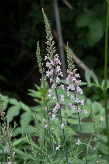 Linaria at Dalston Eastern Curve