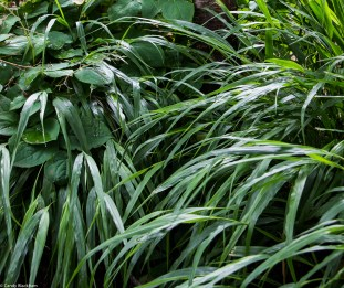 Hachonechloa & epimediums at Dalston Eastern Curve