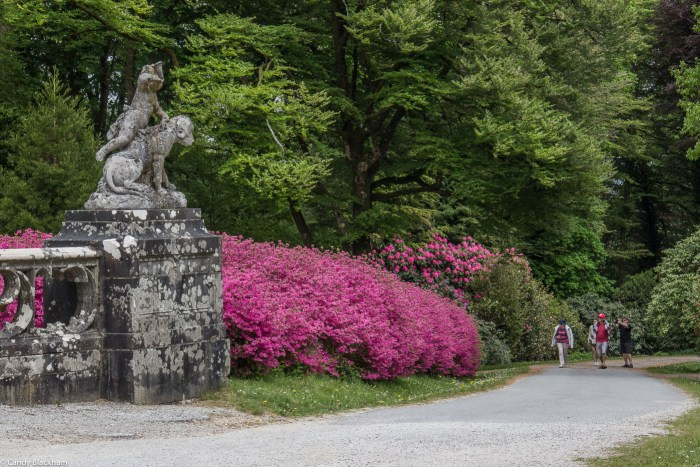 Rhododendrons at The Chateau of Trevarez