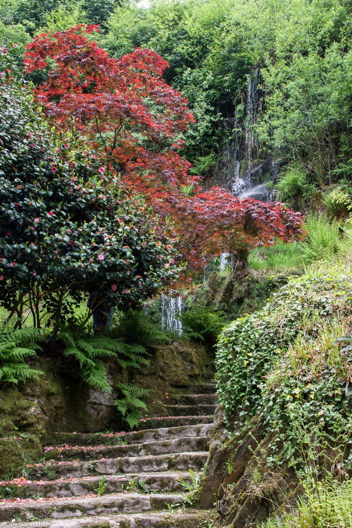 The quarry garden in the Chateau of Trevarez