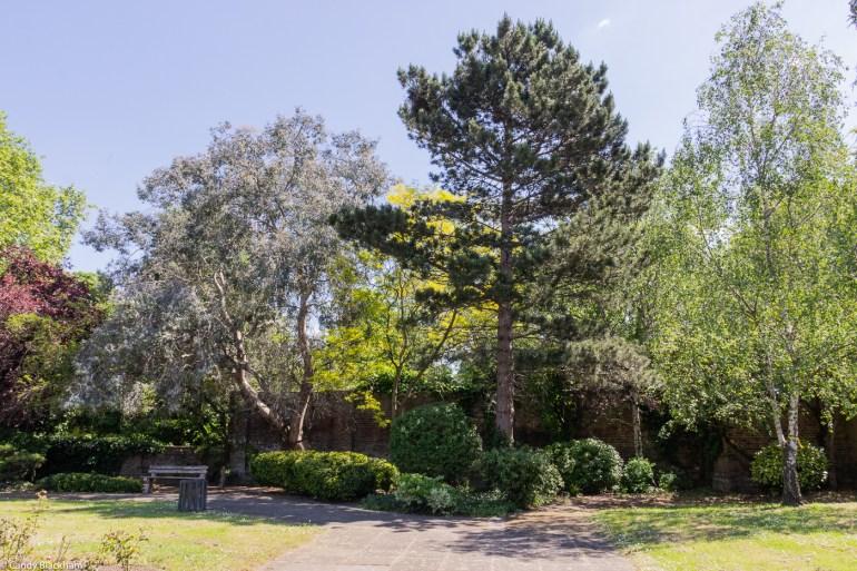 Eucalyptus & pine trees