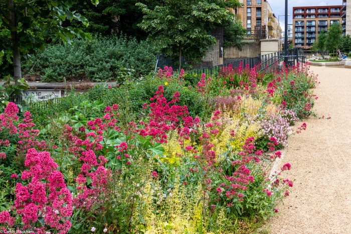 Colourful border in the park
