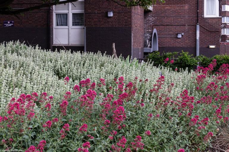 Striking perennials in a border in the park