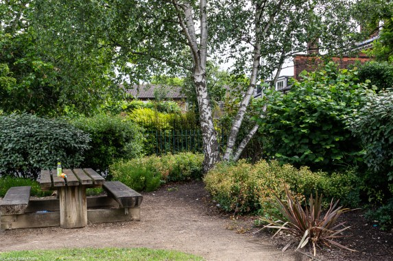 Birch tree and seating at the children's play area