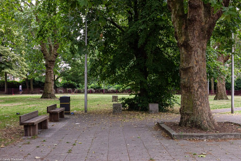 The lawned area with old plane trees in Eckington Gardens Park in New Cross