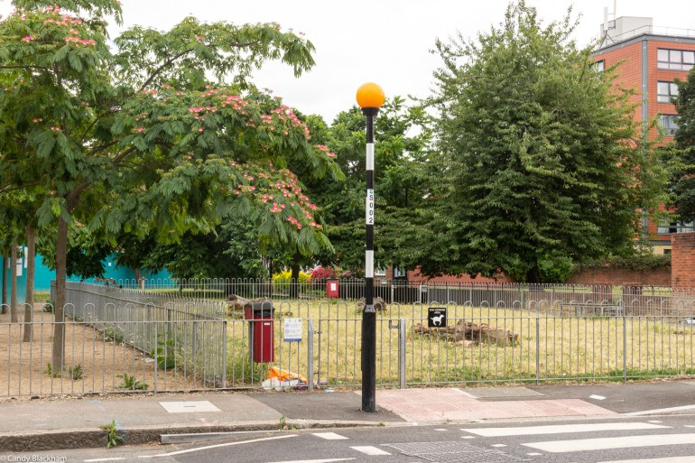 Albizia trees in Hatcham Gardens and dog walking area