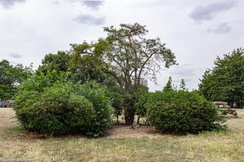 Shrubbery in the gardens