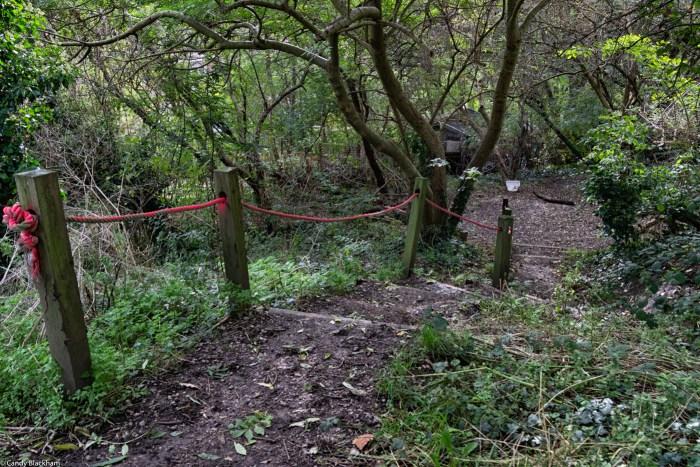 Hilly Fields Woods