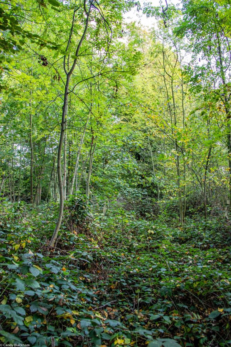 Trees in Brockley Cemetery