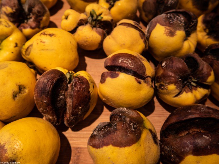 Quinces from The Fortnight Garden