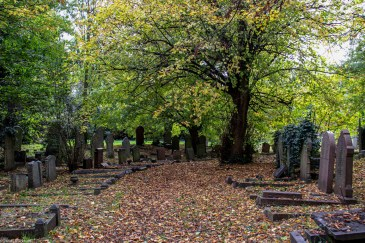 The overgrown square in Ladywell Cemetery