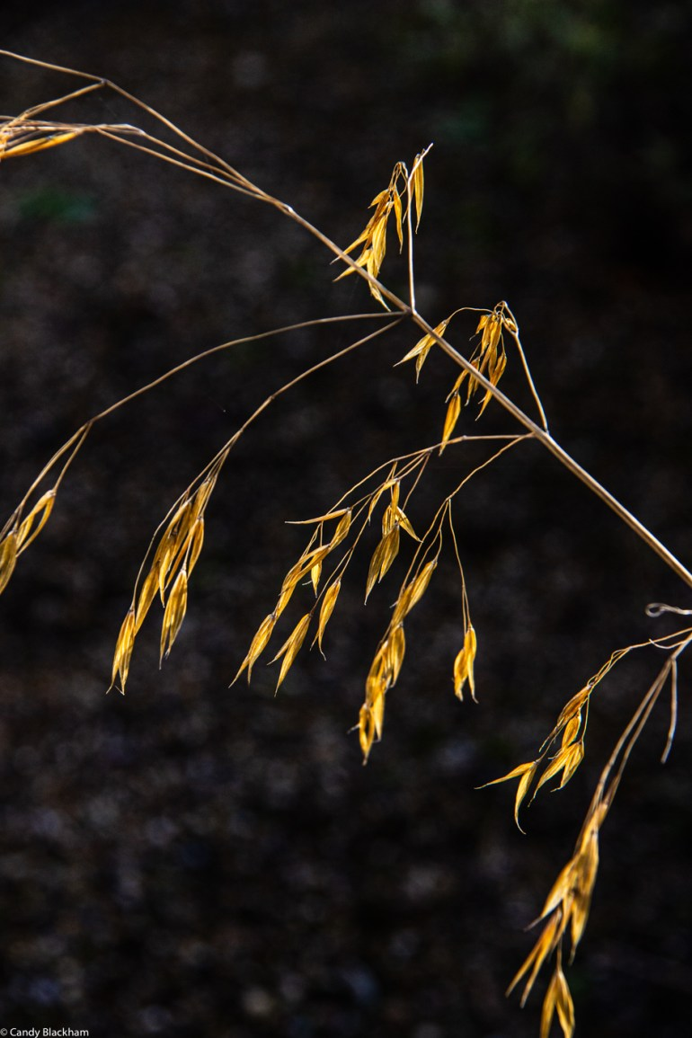 Stipa in Six on Saturday in The Fortnight Garden