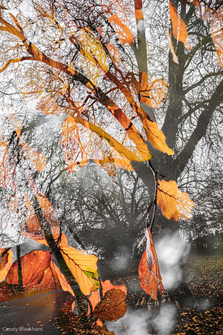 Autumn in Telegraph Hill Park in Lewisham