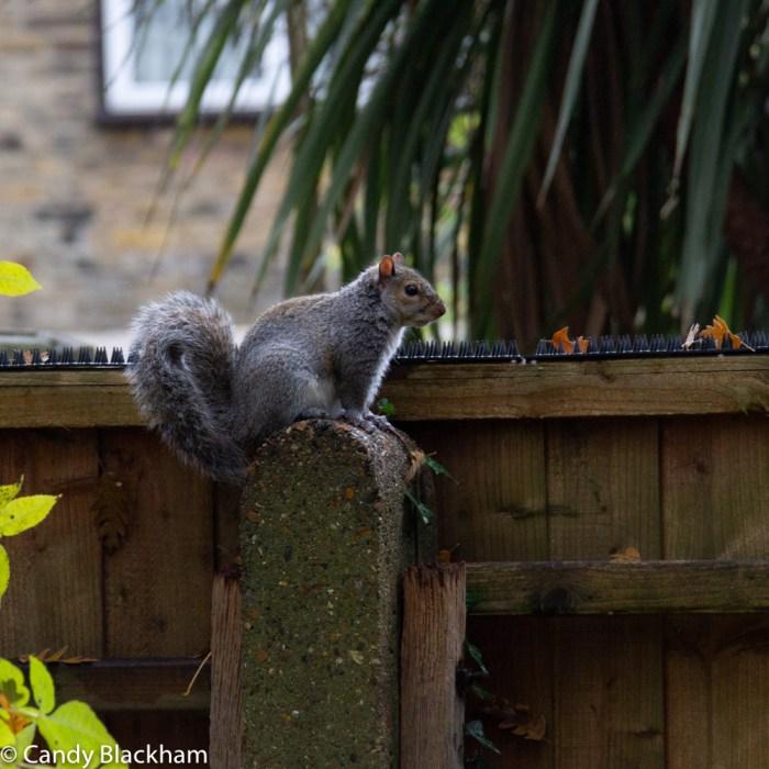 Squirrel in Park in Lewisham