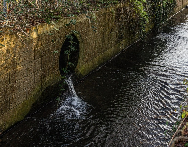 Drainage from the Sports Grounds into the River Quaggy alongside Sydenham Cottages Nature Reserve
