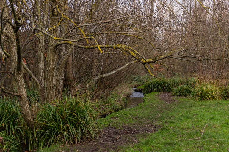 River Quaggy out of its culvert in Chinbrook Meadows