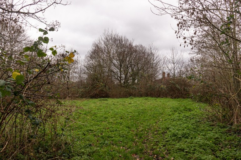 A small meadow in the middle of the reserve