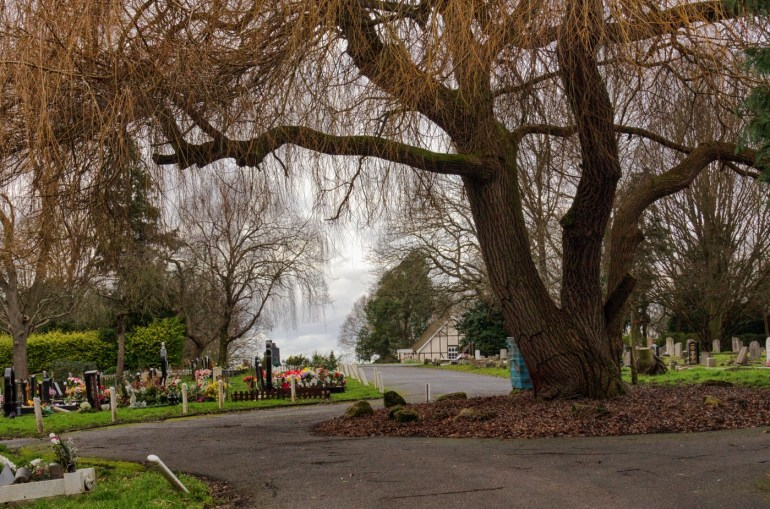 Large willow tree in Grove Park Cemetery