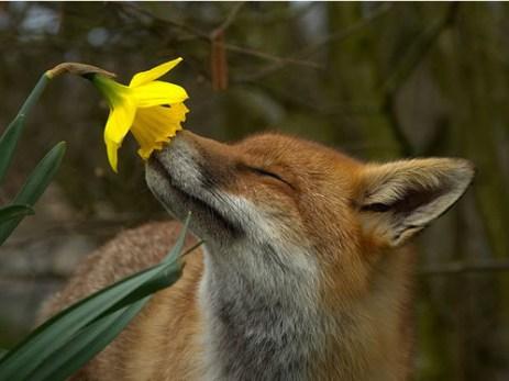 spring fox green cute