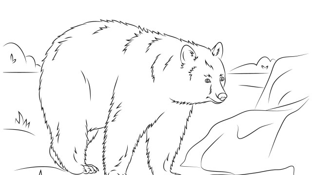 Bear Coloring Pages American Black Bear Family Coloring Page Supercoloring Com Cool