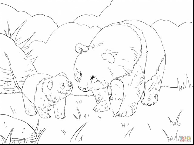 Bear Coloring Pages Unique Panda Bear Coloring Pages Attractive Giant Page Free